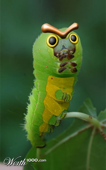 Caterpie Real